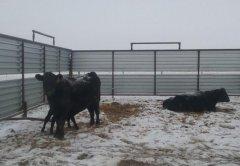 养殖鸡/鸭/猪/羊/牛围栏