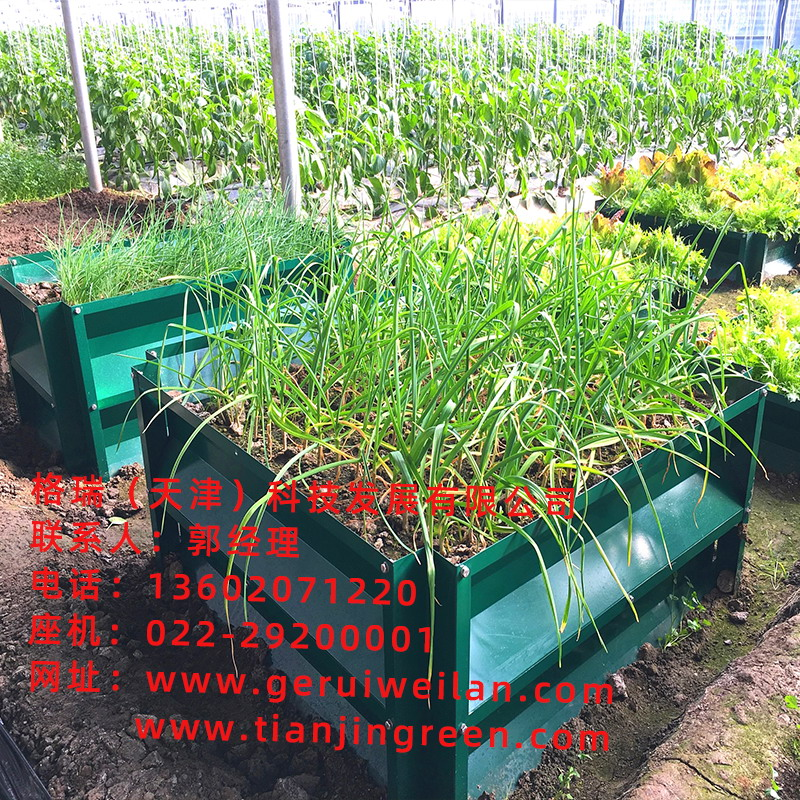 蔬菜大棚蔬菜种植箱